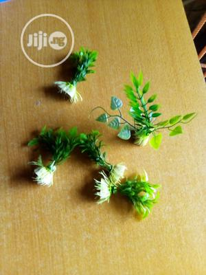 Your Green Plant | Pet's Accessories for sale in Lagos State, Surulere