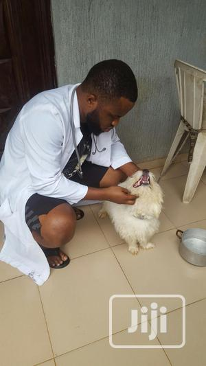Experience And Swift Vet Doctor | Pet Services for sale in Lagos State, Ikeja