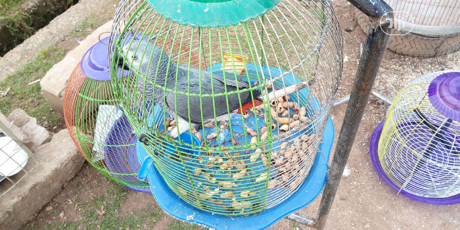Archive: One Talking Parrot For Sale