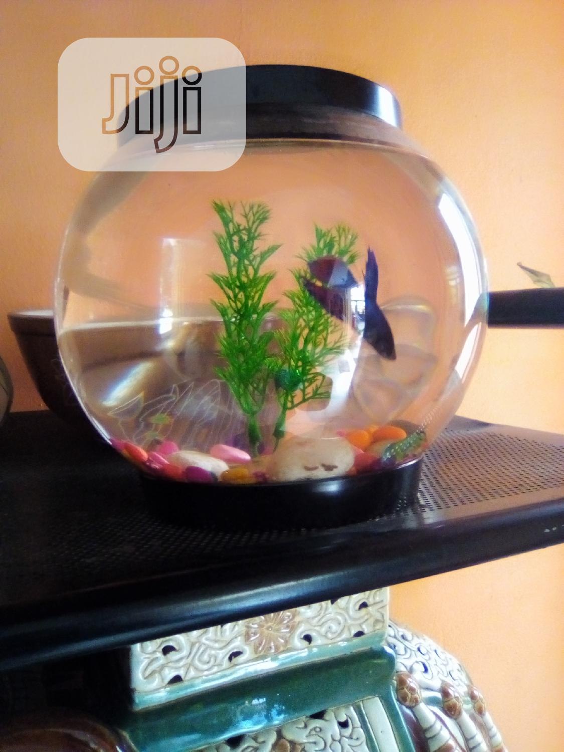 Fish Bowl Kit   Pet's Accessories for sale in Surulere, Lagos State, Nigeria