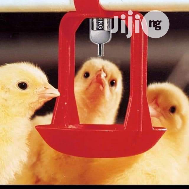 Dekoraj Farms Poultry Drinkers