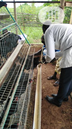 Veterinary Services | Pet Services for sale in Ogun State, Abeokuta South