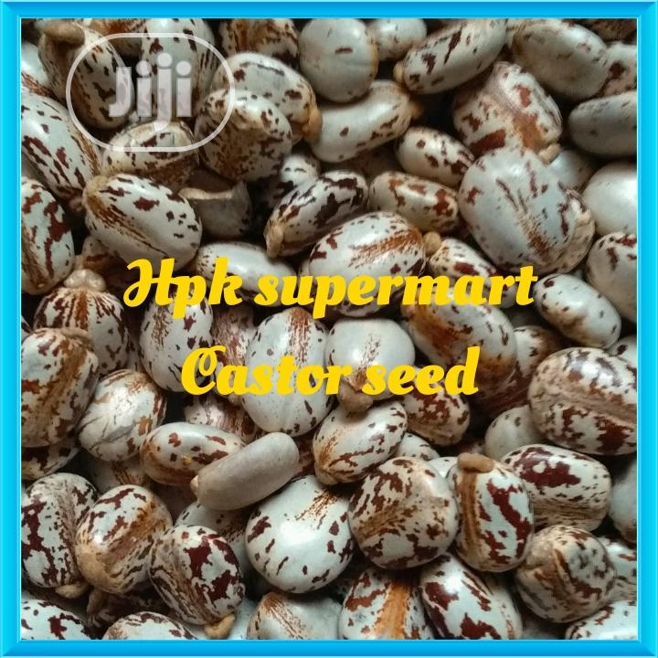 Wholesale Castor Seed Organic Castor Seed KG