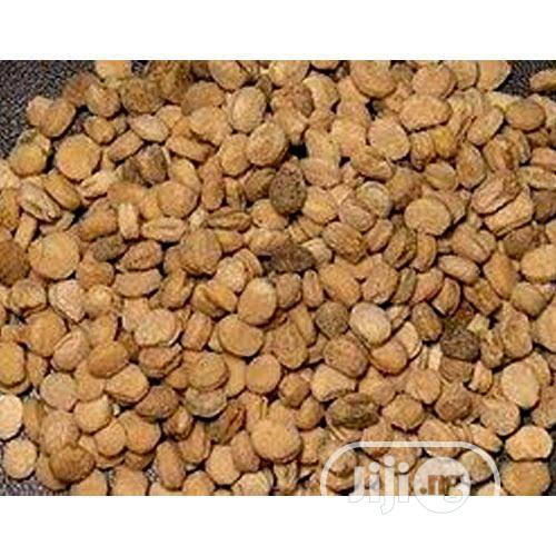 Ginger Seeds Organic Ginger Seeds