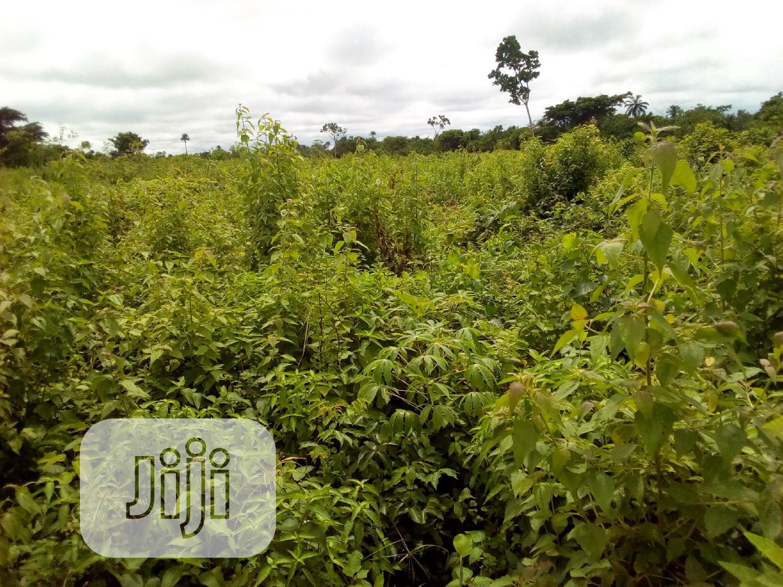 Acres (6plots) Virgin Farm Land