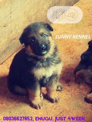 Baby Male Purebred German Shepherd Dog | Dogs & Puppies for sale in Enugu State, Enugu