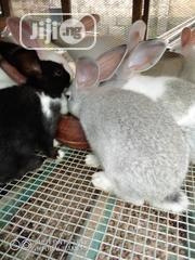 Rabbit For Pet | Livestock & Poultry for sale in Lagos State, Surulere