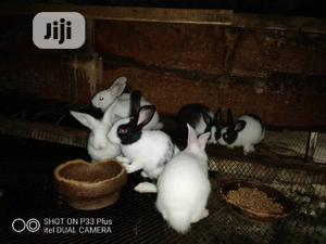Loving Rabbit Waiting   Livestock & Poultry for sale in Lagos State, Surulere
