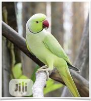 Ring-neck Parakeet & Cage | Birds for sale in Lagos State, Alimosho