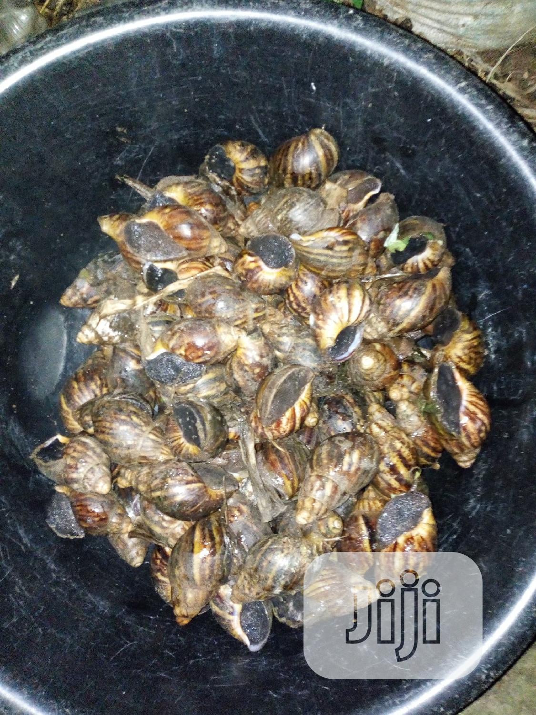 Snail Meat | Other Animals for sale in Ado-Odo/Ota, Ogun State, Nigeria