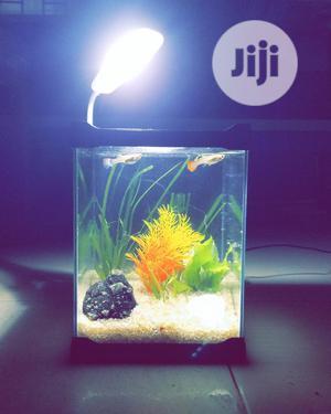 Mini Aquarium 21cm   Fish for sale in Lagos State, Ipaja