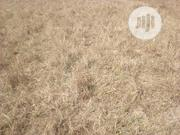 Plots Of Land For Sale 100 By 50 At PLATEAU STATE UNIVERSITY BOKKOS | Land & Plots For Sale for sale in Plateau State, Bokkos