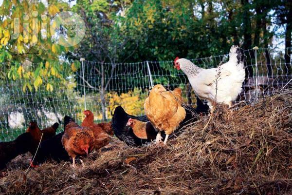 Dynapharm 1litre DI Grow Green Organic Plus Foliar Fertilizer | Feeds, Supplements & Seeds for sale in Ikeja, Lagos State, Nigeria