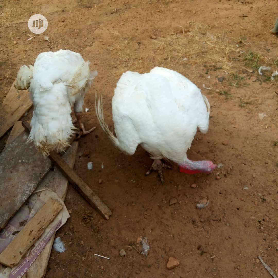 Imported Turkey | Livestock & Poultry for sale in Osogbo, Osun State, Nigeria