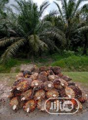30 Acres Ready To Harvest Palm Plantation 4sale @Yewa South,Ogun State | Commercial Property For Sale for sale in Ogun State, Ayetoro