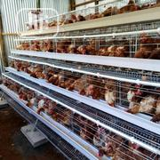 China Factory Battery Cages 120birds 3tires Best Poultry Chicken Cage | Farm Machinery & Equipment for sale in Kano State, Ajingi