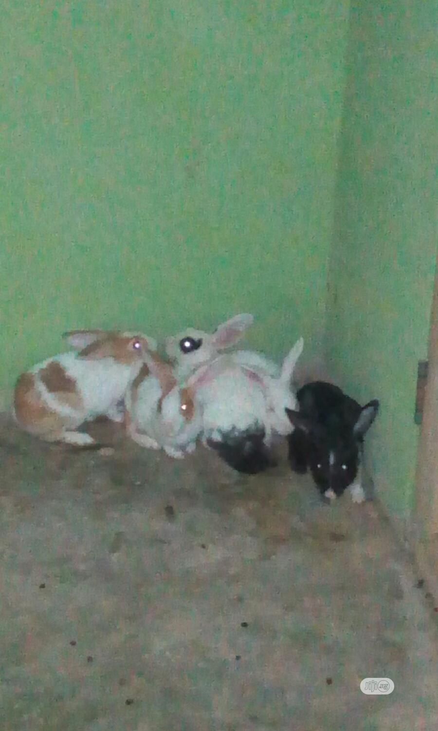 Well Healthy Rabbits Is Available For Sale
