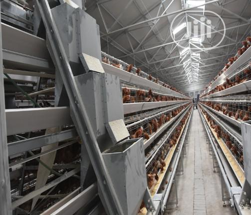 China Factory Battery Cage Best Quality Poultry Cage | Farm Machinery & Equipment for sale in Ondo / Ondo State, Ondo State, Nigeria