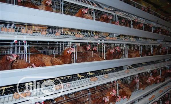 China Factory Battery Cage Best Quality Poultry Cage