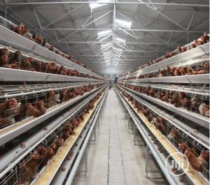 China Factory Best Quality Battery Cage   Farm Machinery & Equipment for sale in Lagos State, Ikorodu
