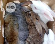 Rabbit Weaners | Livestock & Poultry for sale in Abuja (FCT) State, Maitama