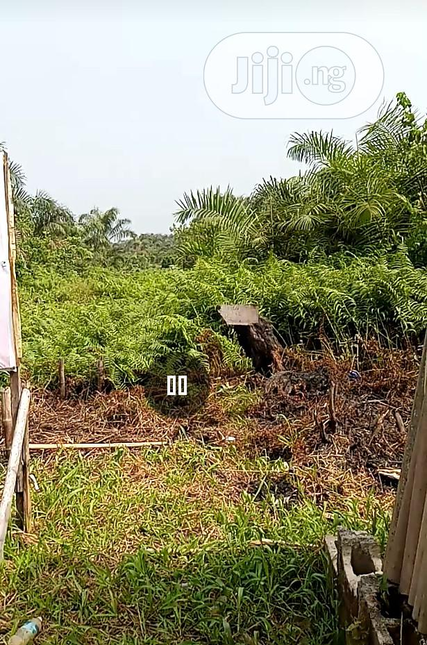 Archive: Cheapest Land In Shapati Ajah