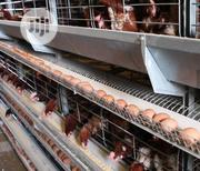 Battery Cage China Factory Hot Galvanized Battery Cages   Farm Machinery & Equipment for sale in Lagos State, Ojota