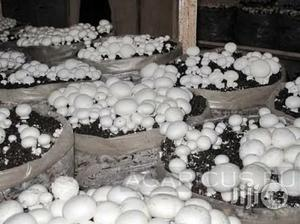 Mushroom Farming Manual | Books & Games for sale in Abuja (FCT) State, Lugbe District