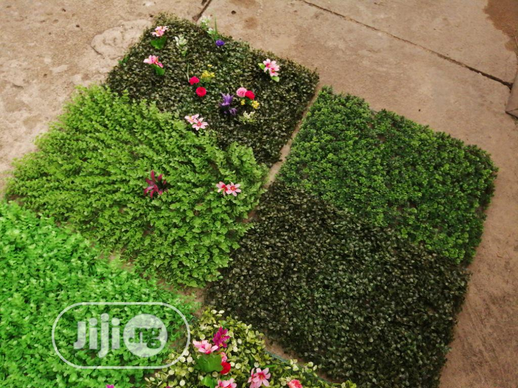 Boxwood Green Creeping Wall Plants For Outdoor And Indoor Decorations