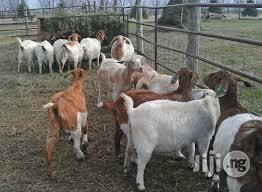 Goat Farming Manual | Books & Games for sale in Abuja (FCT) State, Lugbe District