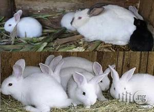 Rabbit Farming Manual | Books & Games for sale in Abuja (FCT) State, Lugbe District