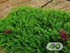 Artificial Creeping Wall Plants For Compound Walls | Garden for sale in Lagos State, Ikeja