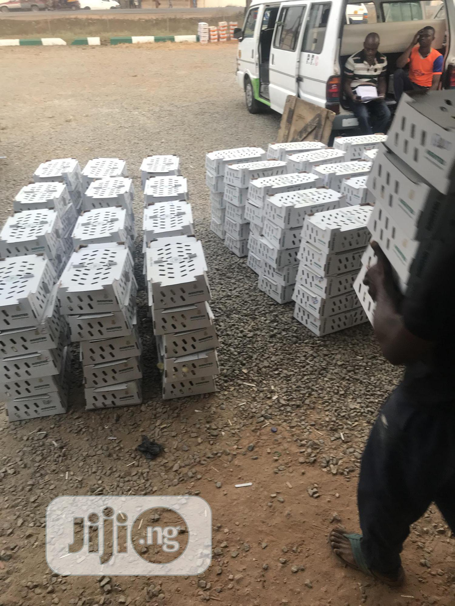 Boilers Day Old Chicks 🐥 (Agrited Production) | Livestock & Poultry for sale in Abakaliki, Ebonyi State, Nigeria