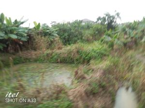 2 Acres Catfish Farm For Lease | Feeds, Supplements & Seeds for sale in Lagos State, Ikorodu