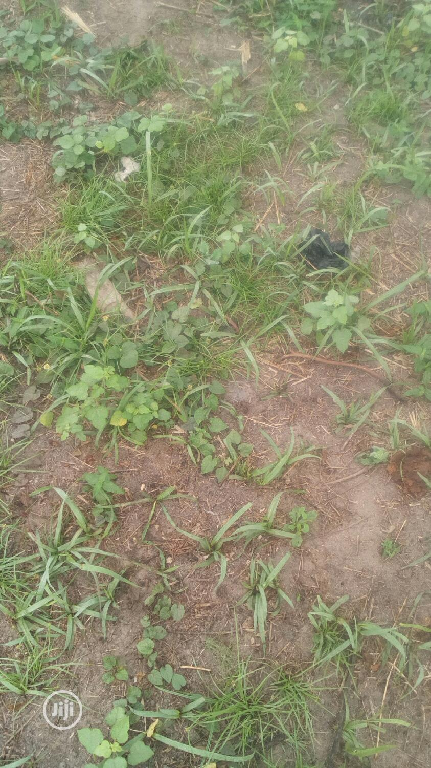 Buy Dry Land At Muwo Badagry Plot Of Land For Sale 600sqm | Land & Plots for Rent for sale in Maryland, Lagos State, Nigeria