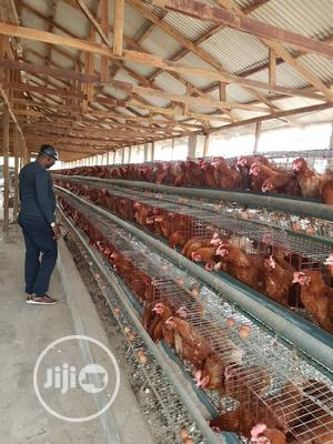 A Poultry Farm for Sale   Farm Machinery & Equipment for sale in Ogun State, Ewekoro