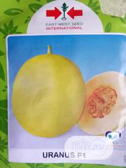 Uranus F1 Sweet Melon (1000 Seed Pack) | Feeds, Supplements & Seeds for sale in Delta State, Uvwie