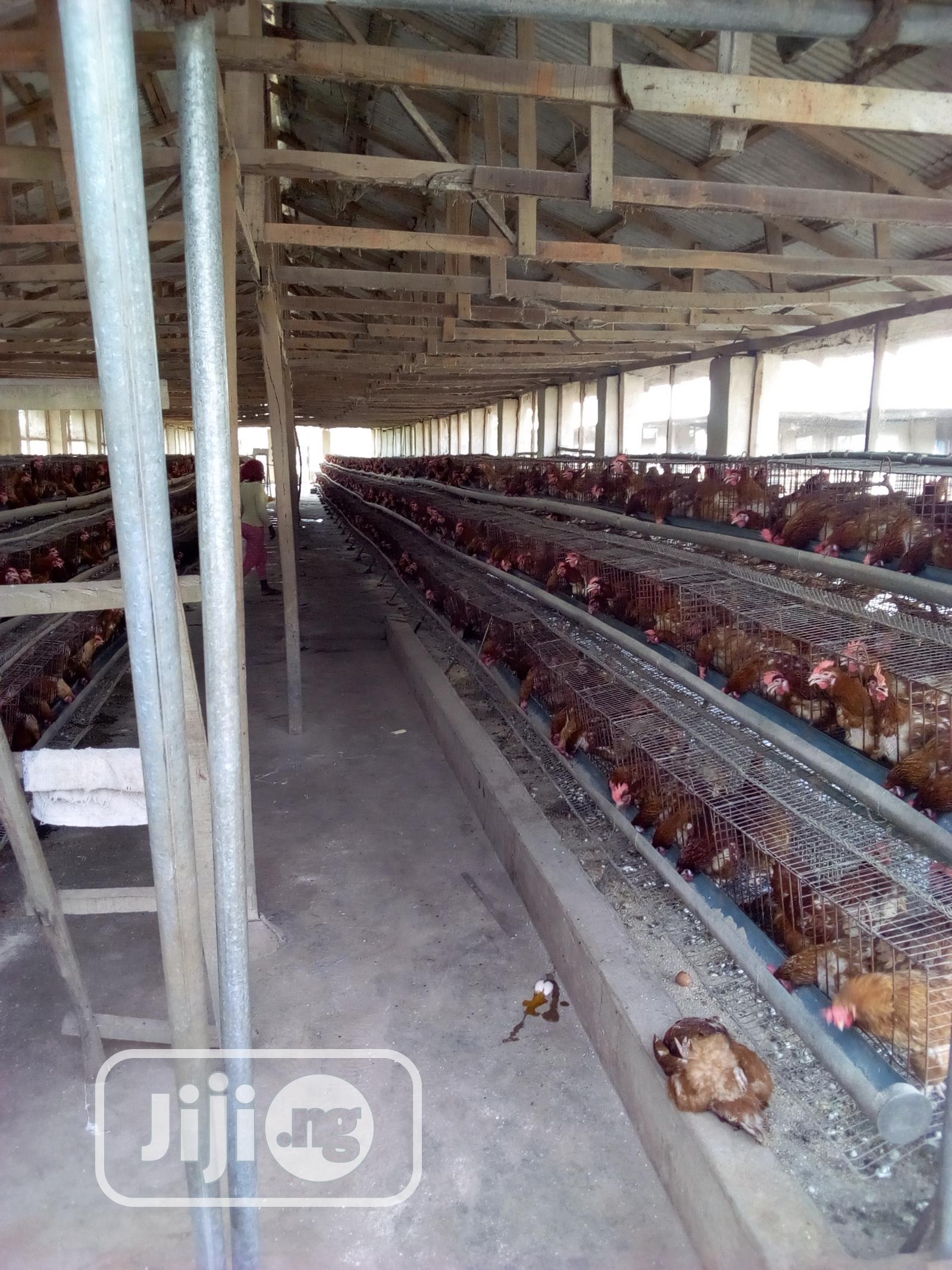 Archive: Poultry Farm For Sale: