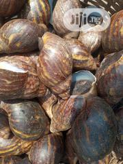 Live&Oven Dried Snails For Sale | Livestock & Poultry for sale in Lagos State, Ikeja