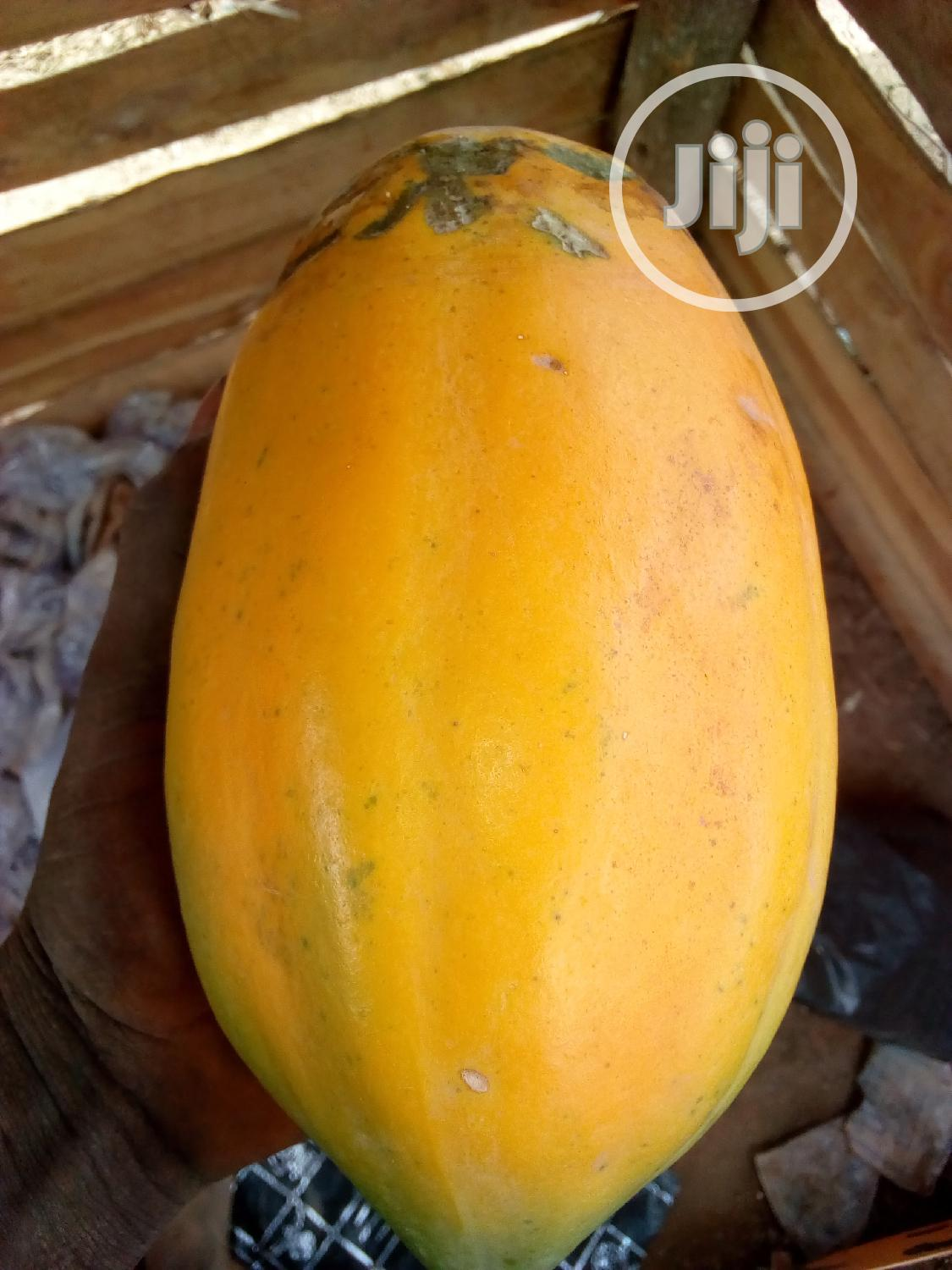 Dwarf Pawpaw Seeds and Seedling for Sale | Feeds, Supplements & Seeds for sale in Ona-Ara, Oyo State, Nigeria