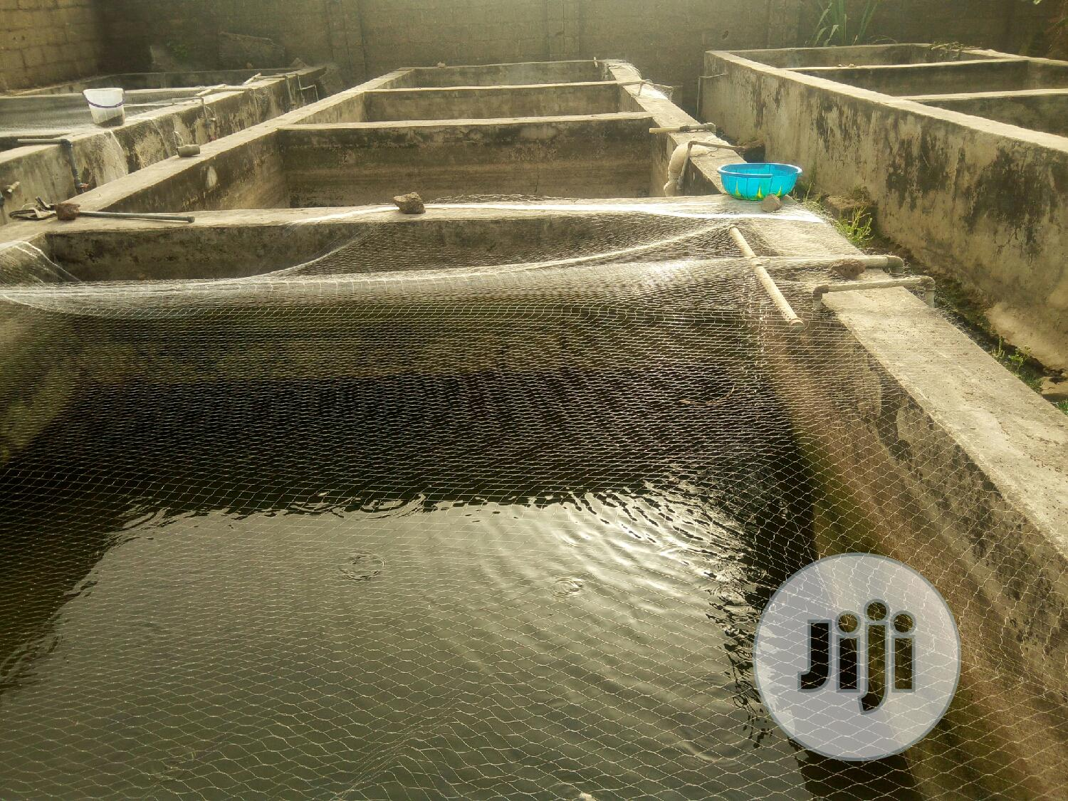 Fish Ponds For Rent   Farm Machinery & Equipment for sale in Masaka, Abuja (FCT) State, Nigeria