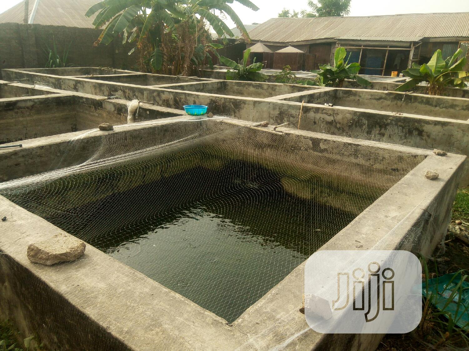 Fish Ponds For Rent
