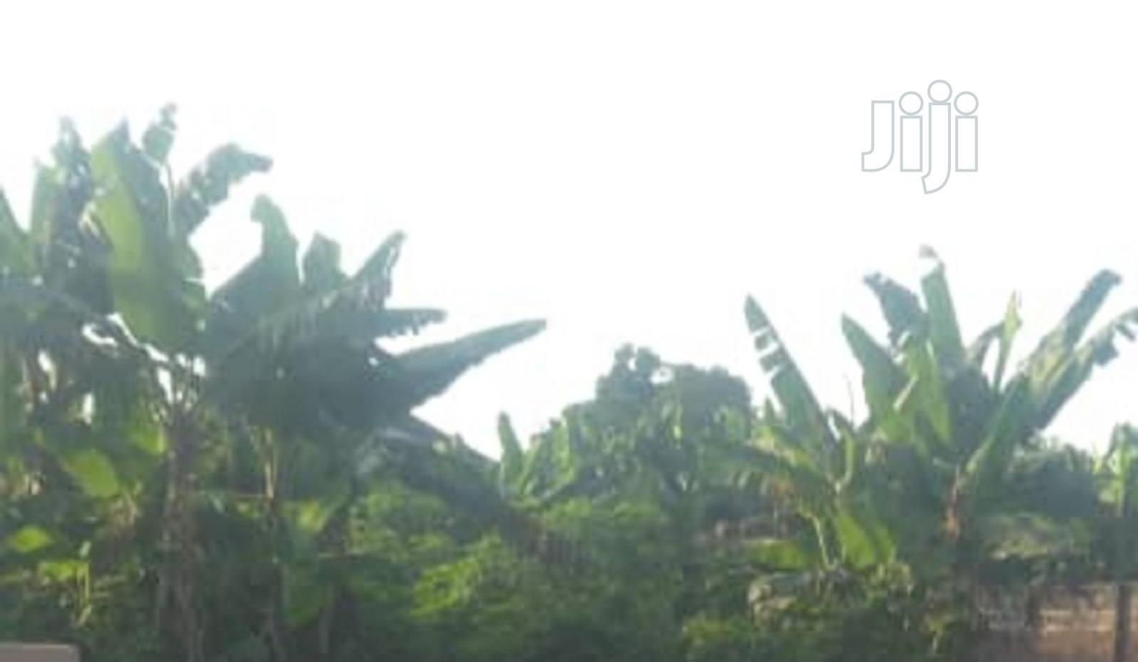 Archive: Commercial/Farm Land Benin City For Lease