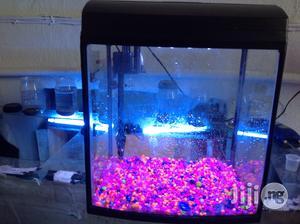 Assorted Aquariums   Fish for sale in Lagos State, Victoria Island