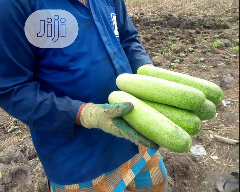 Archive: Hybrid Vegetable Seeds