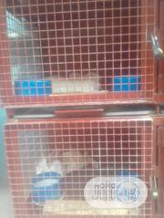 Matured Rabbits For Sale | Livestock & Poultry for sale in Lagos State, Ikeja