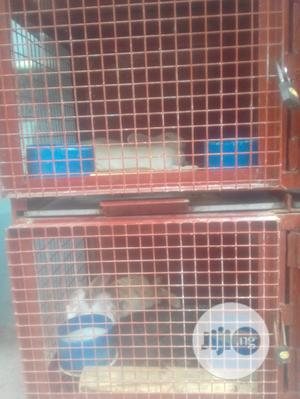 Mature Rabbits For Sale | Livestock & Poultry for sale in Lagos State, Ikeja