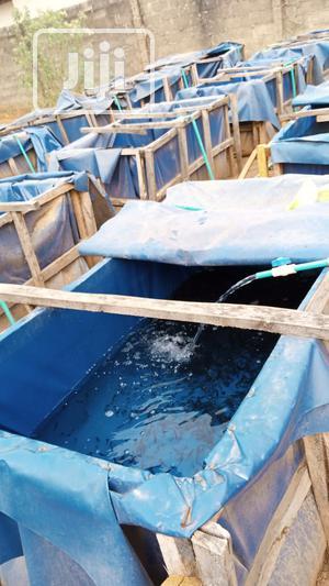 Fingerlings And Juvenile | Livestock & Poultry for sale in Abuja (FCT) State, Dutse-Alhaji