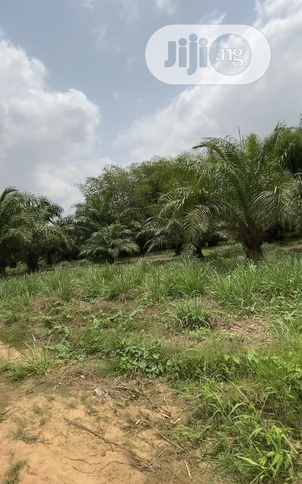 Cheap Agricultural Farm Lands In Ogun State