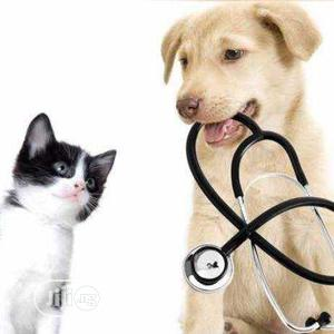 Veterinary Doctor | Pet Services for sale in Lagos State, Agege